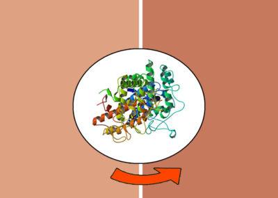 Tyrosine en pigmentverkleuring